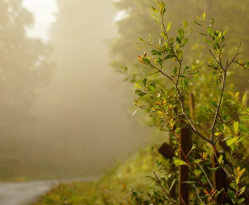 Neblige Landschaft zum Morgengrauen in Norwegen