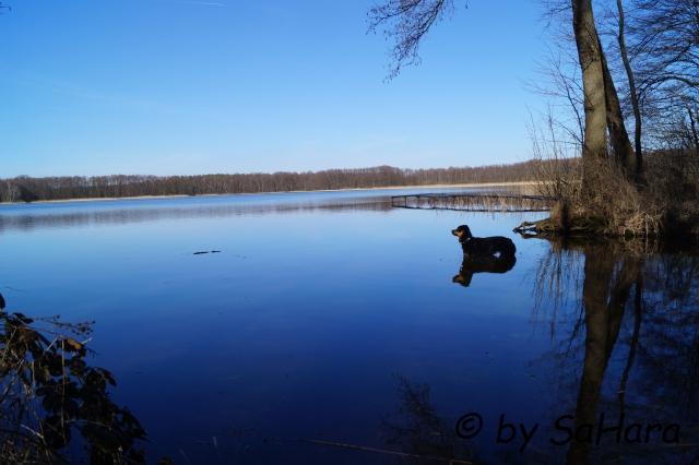 Hund im Wasser stehend